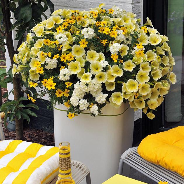 Blumen-gelb