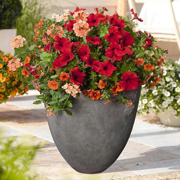 Blumen-rot