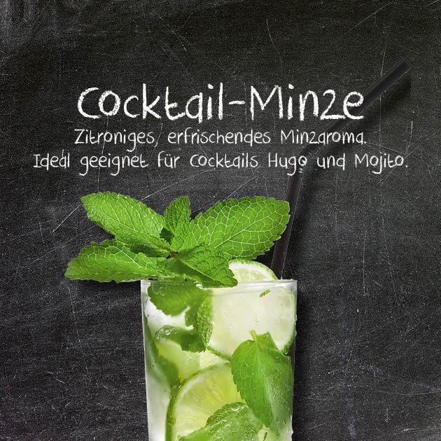 Cocktail-Minze