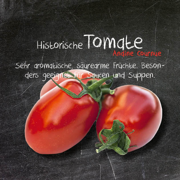 Tomate-AC